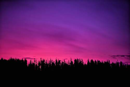 nature pink sky over forest at sunset outdoors