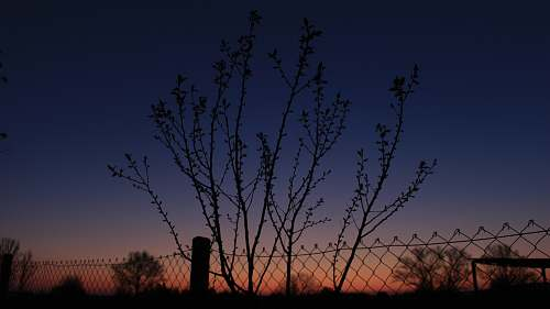nature silhouette of a metal fence and trees at sunset outdoors