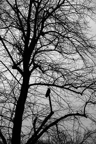 animal silhouette of bare tree black-and-white