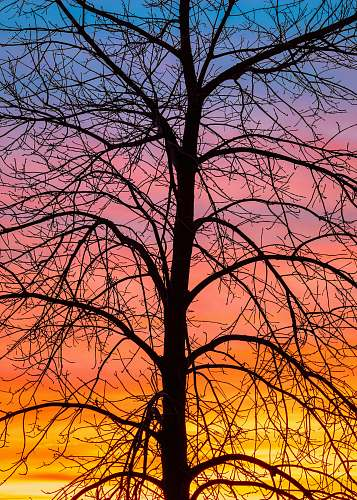 nature silhouette of bare tree during golden hour outdoors