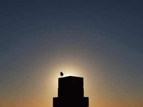 nature silhouette of bird on tower during golden hour outdoors