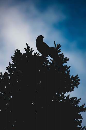 photo animal silhouette of bird perched on tree bird free for commercial use images