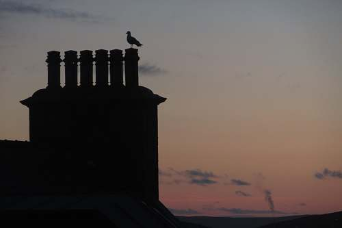 photo animal silhouette of bird perching on building bird free for commercial use images
