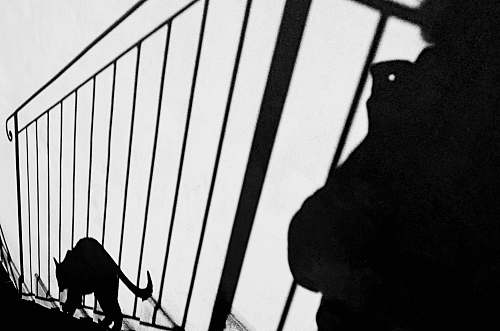 black-and-white silhouette of cat stepping on stairs banister