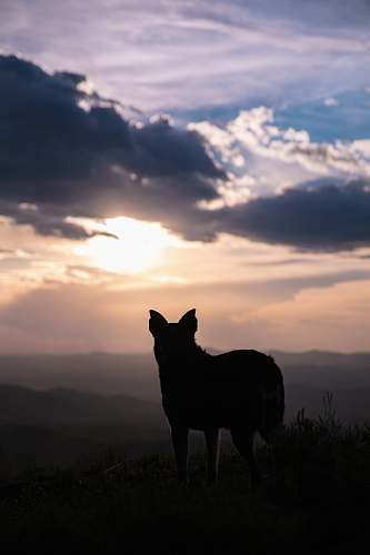 nature silhouette of dog outdoors