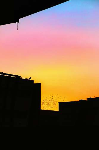 nature silhouette of flying birds below building during golden hour outdoors