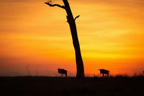 outdoors silhouette of four legged animal nature