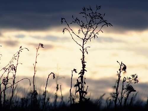 nature silhouette of grass grass