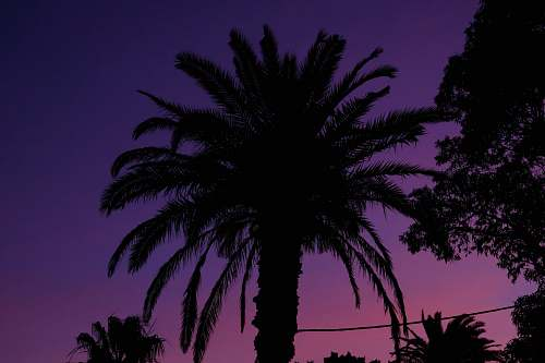 nature silhouette of palm tree outdoors