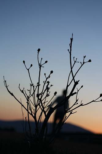 nature silhouette of person and plant outdoors