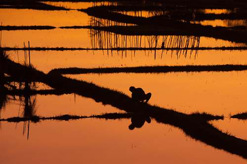 bali silhouette of person on rice field indonesia