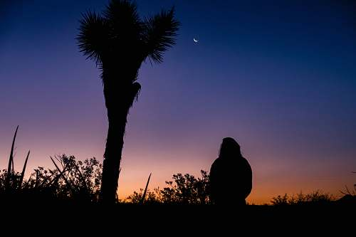 tree silhouette of person standing near palm tree arecaceae