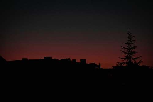 nature silhouette of pine tree sky