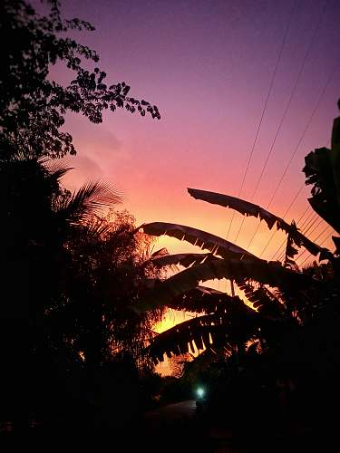 nature silhouette of plants under orange skies sunlight