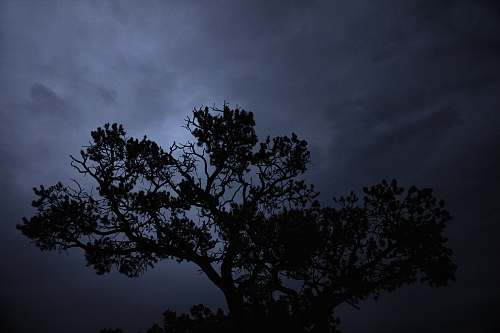 nature silhouette of tree during daytime outdoors