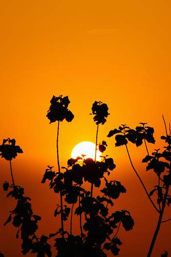 nature silhouette of tree under orange sky sunlight
