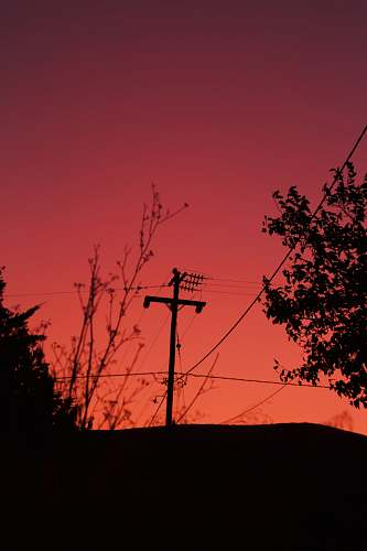 nature silhouette of utility pole and trees dawn