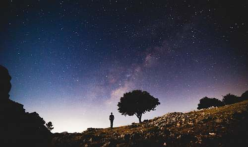tree silhouette photo of person standing near trees under white stars person