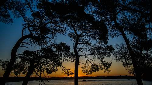 nature silhouette photo of tree outdoors