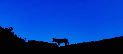 blue silhouette photography of an animal on top of a mountain horse