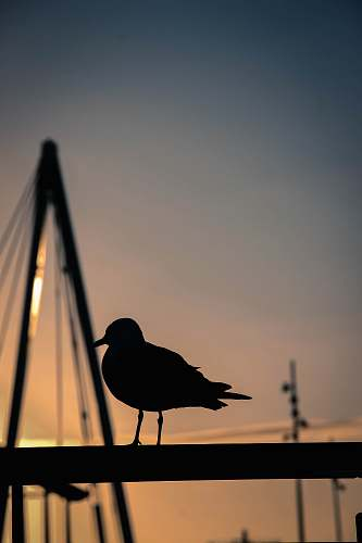 photo animal silhouette photography of bird bird free for commercial use images