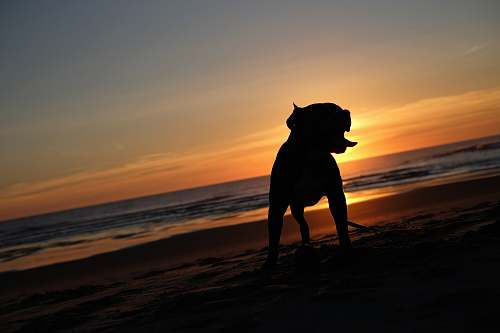 nature silhouette photography of dog outdoors