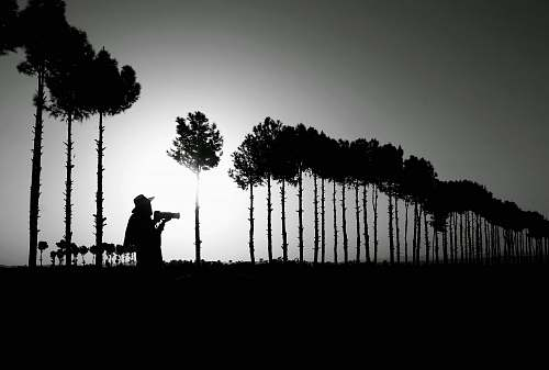 black-and-white silhouette photography of person standing near trees plant