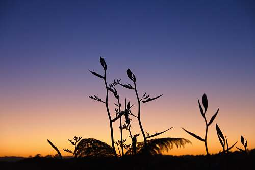 nature silhouette photography of plant sky