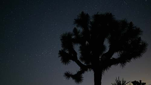 nature silhouette photography of tree under starry night outdoors