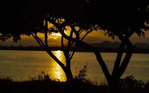 nature silhouette photography of trees by the beach during golden hour outdoors