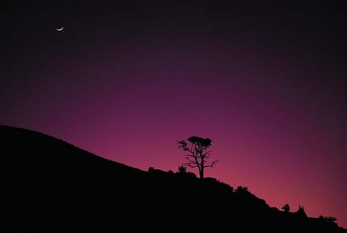 nature silhouette tree and pink sky outdoors