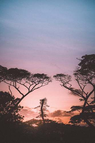 nature trees at sunset outdoors
