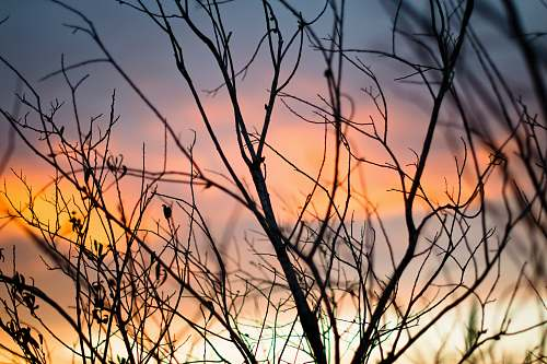 nature bare trees during golden hour outdoors