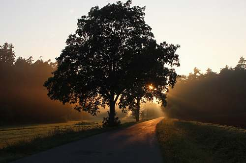 road silhouette of tree beside the tree nature