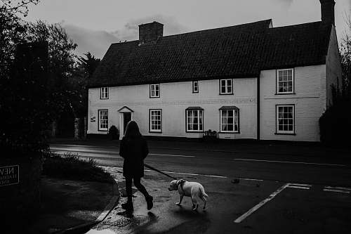 human grayscale photo of woman and dog walking near street and building people