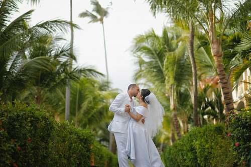 people bridge and groom kissing wedding
