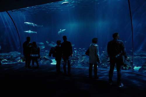 water silhouette photo of group of people watching fishes on underwater aquarium aquarium