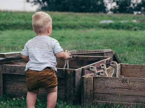 people toddler in front of flock of ducklings inside crates person