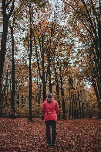 people woman standing between bare trees person