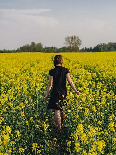 people woman walking in yellow flower field person