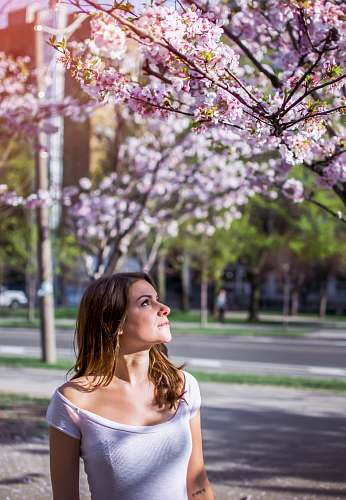 photo people woman wearing pink top looking at pink flowering tree person free for commercial use images
