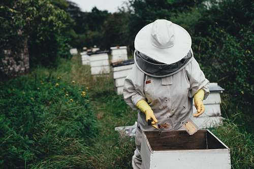apiary bee person planting bee