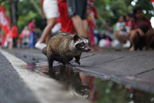 person brown racoon on floor during daytime human