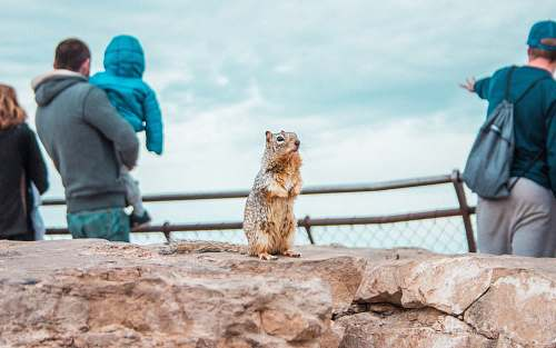 person brown squirrel standing on the stone human