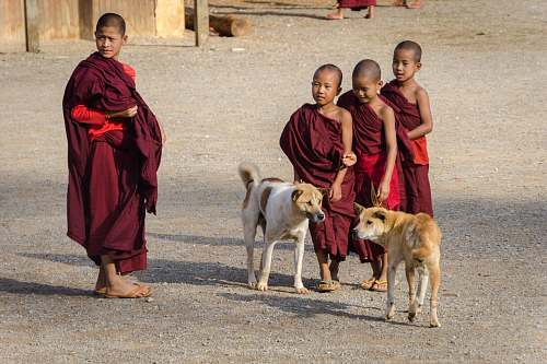 person four boys wearing red thobes with two dogs on road monk
