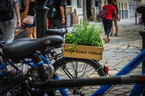 human green leafed plants on commuter bicycle bicycle