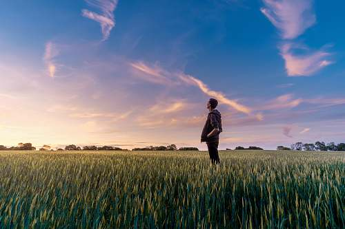 sunset man on grass field looking at sky field