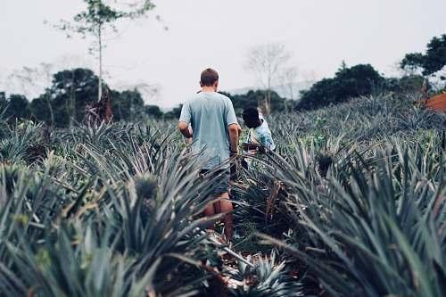 human people standing on pineapple farm plant