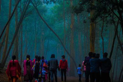 human people walking in forest person