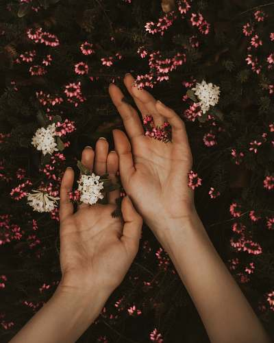person person holding white and pink flowers human